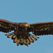 Ørnens Dag på Aage V. Jensen Naturfonds naturområder