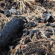 Ild bekæmper de uønskede nåletræer i Lille Vildmose