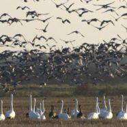 Den største kortlægning nogensinde af Danmarks fugle