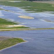 Udvikling i lagune overrasker biologer